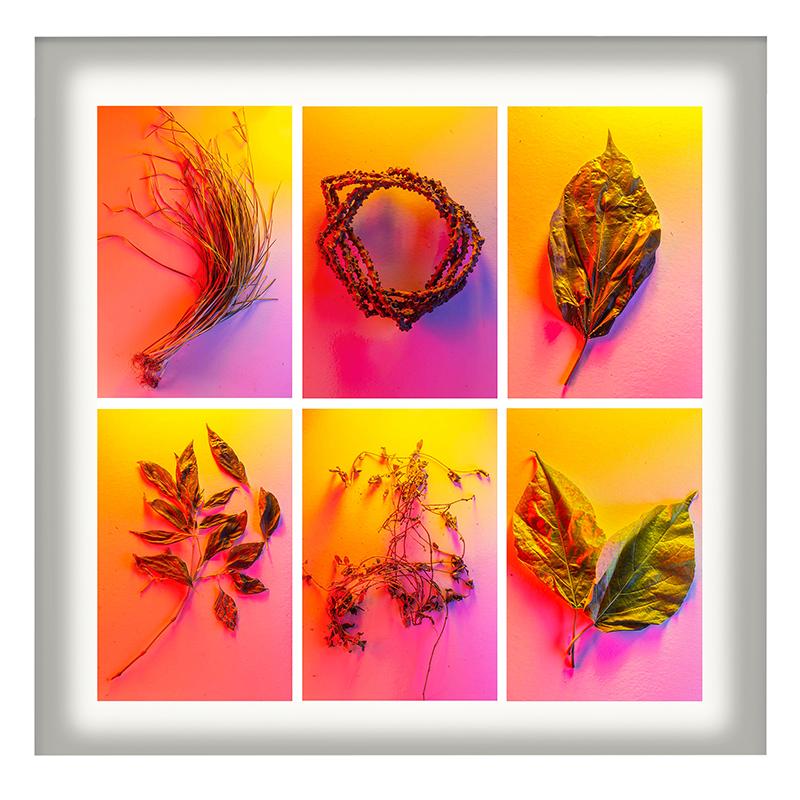 Cru Camara_Medicinal Plants (Polyptych)24x24in framed